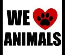 Marcas cosméticas que NO testa en animales